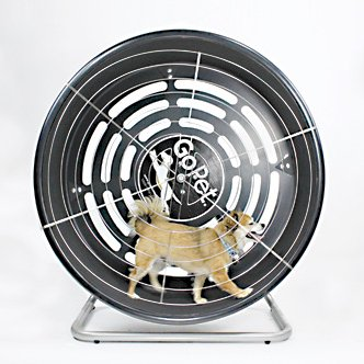 GoPet TreadWheel For Small Dogs