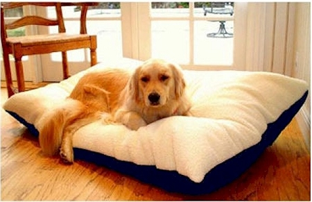Dog Beds, Toys, and Grooming