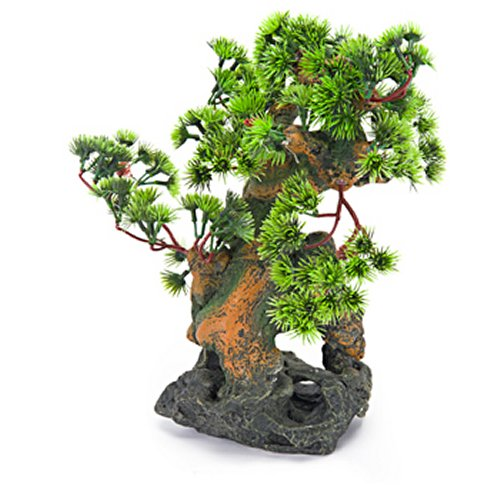 Bonsai Tree on Rocks