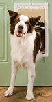 PetSafe Plastic Dog Door - Large