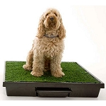 Pet Loo Potty Training System - Medium