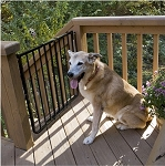 Stairway Special Outdoor Pet Gate